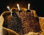 LUWAK COFFEE / CIVET COFFEE HIGH QUALITY AND ORIGINAL